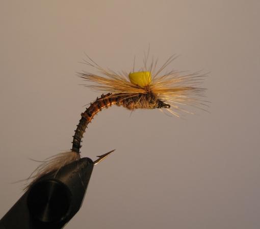 Hexagenia Recurvata (Brown Drake) Emerger