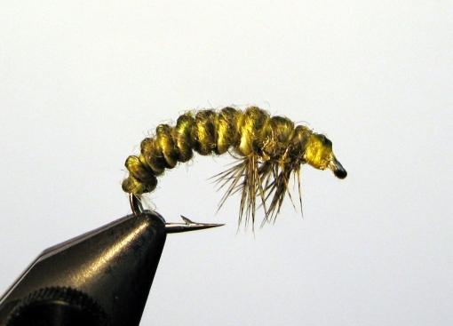Rhyacophilla Larva