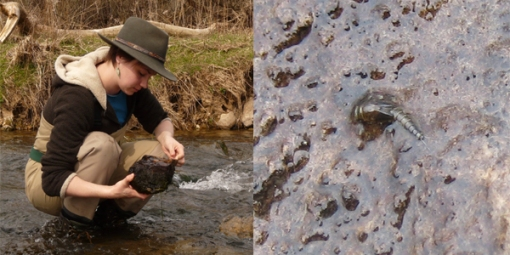 Examining Insects in Riffle below Collins Road Bridge