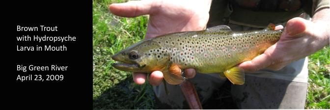 pauls-colorful-brown2