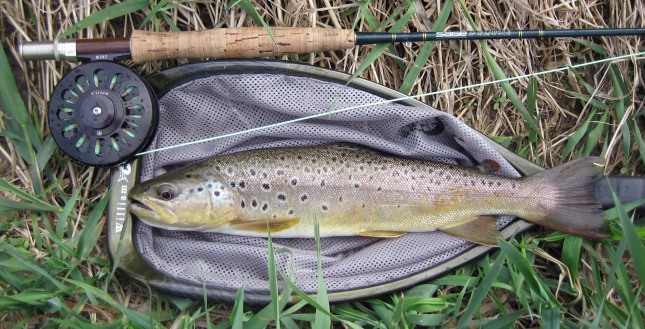Brown Trout Taken at Day's Close