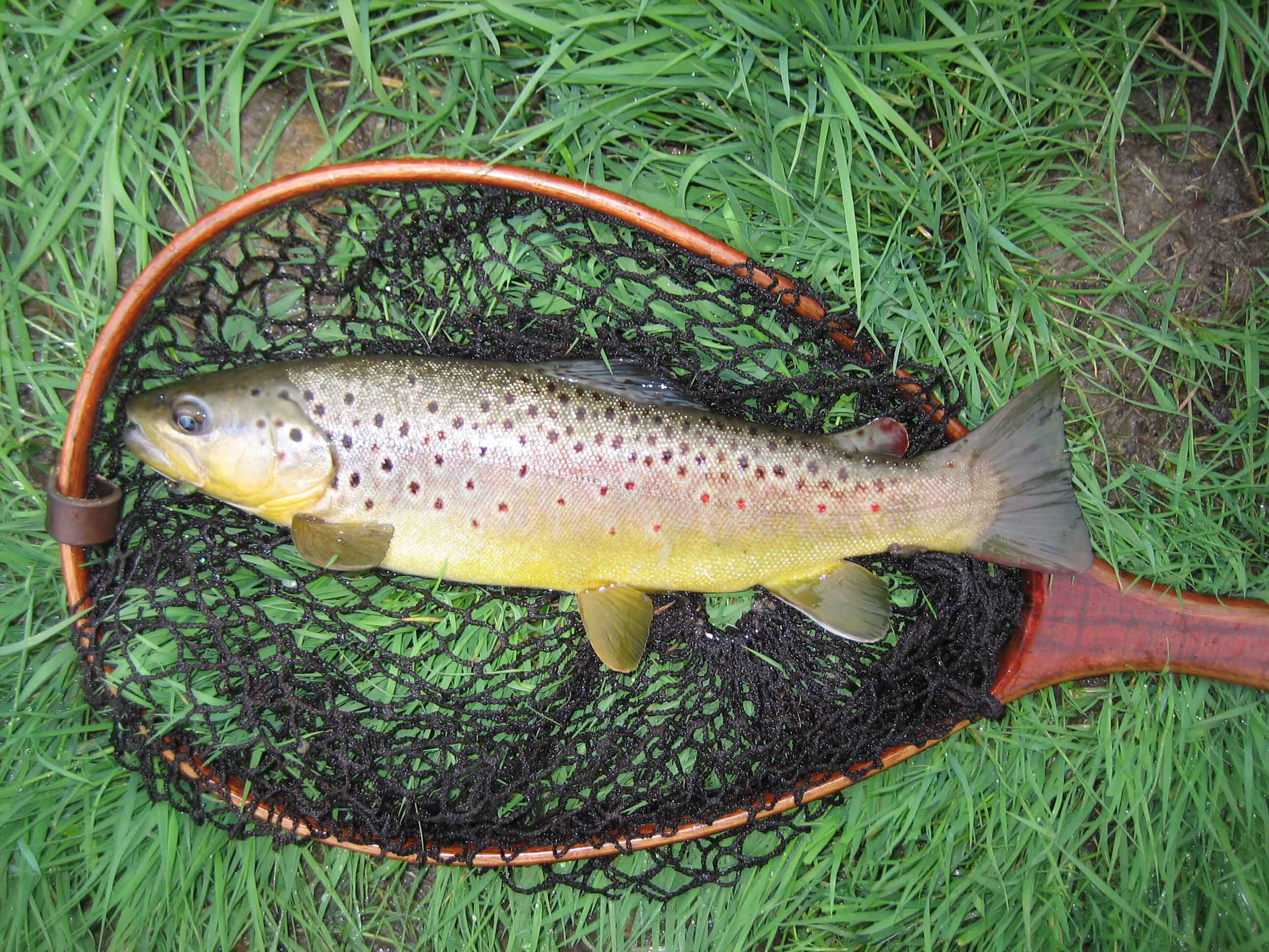 Brc wifly a wisconsin flyfishing blog for Trout fishing wisconsin